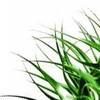 en-herbe