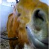 Magical-Horses