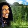 le-bob-marley