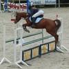poneys-cso-50