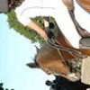 nous-et-les-chevaux-x3