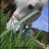 pics-horse