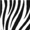 crazy-zebre