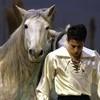 Lorenzo-chevaux