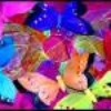 fairy-colorz