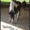 Twiixy-X-Crunchy