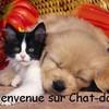 chat-dog