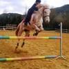 chevaux-34700