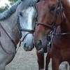 horseloved