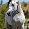 horsegrilsoli