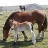 loving-horses25