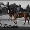 BallaDine-BWP