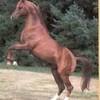 horseeng