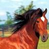 fan-horse