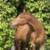 hippo17