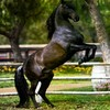 love-cheval1