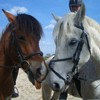 love-our-horses