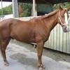 I-Love-Horse-3