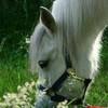 x-horse-love-kiwii-x