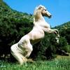 cheval-love59810