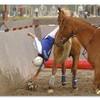 Horse-ball-attitude
