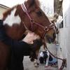 me-love-horse