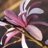 Fleurus41