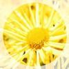 SunshineGiirlz