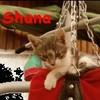 x-bbey-shana