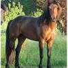 esprit-cheval