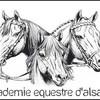 Centaure-Alsacien