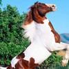 i-love-horse62215