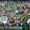 xx-greenboys-xx