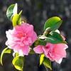 la-fleurkami