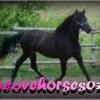 ilovehorses07