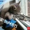 catsniper75