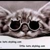 little-kats