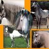 chevaux44450