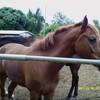 passion-horse974
