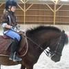 love-horse888