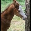 quarterhorse38
