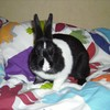 ze-lapinow