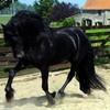 x-ma-passiiOn-chevaux-x