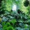 ecolonature