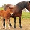 mon-amie-le-cheval