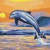 jadorelesdauphins51000