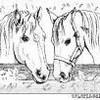 chevauxdumarais