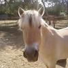 cheval-blog-06