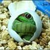 alia-reptile76