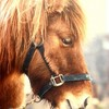 x-miss-cheval-passion-x